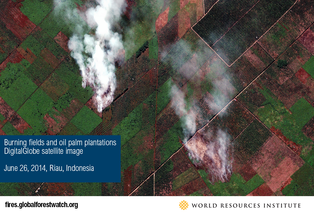 Burning fields and oil palm plantations, DigitalGlobe satellite image
