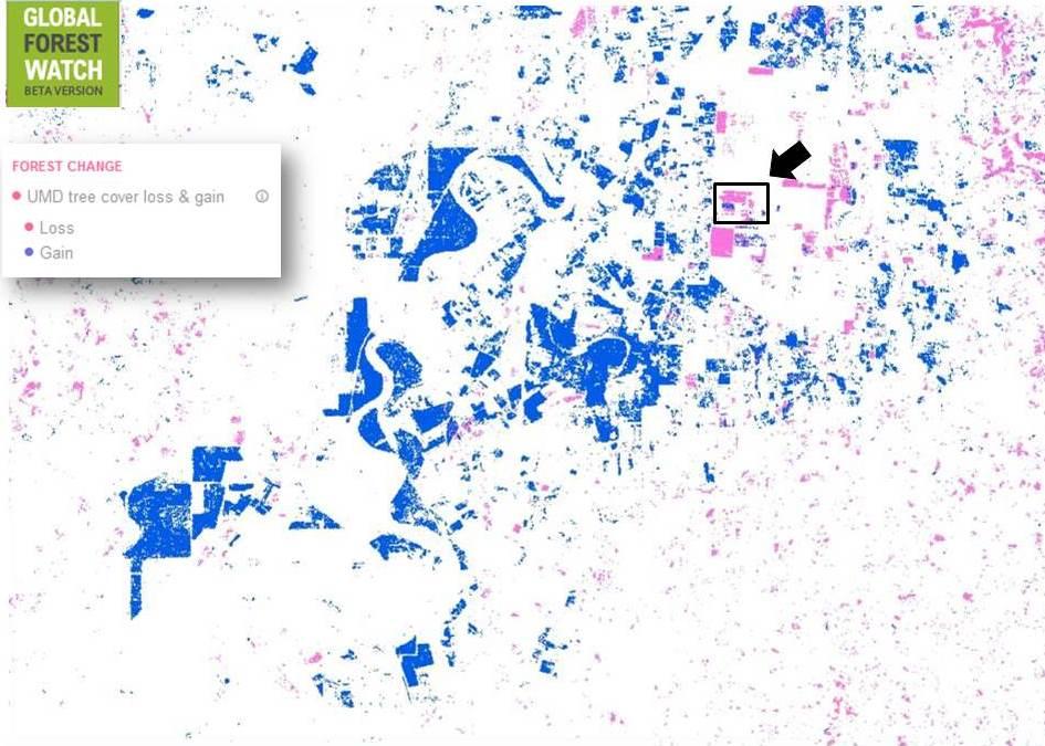 Figura 2. Pérdidas y ganancias de cobertura arbórea en Honduras según la Universidad de Maryland, en Global Forest Watch (con zoom).