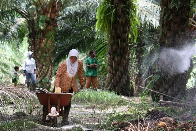 palm_oil_plantation_worker1_ciforflickr