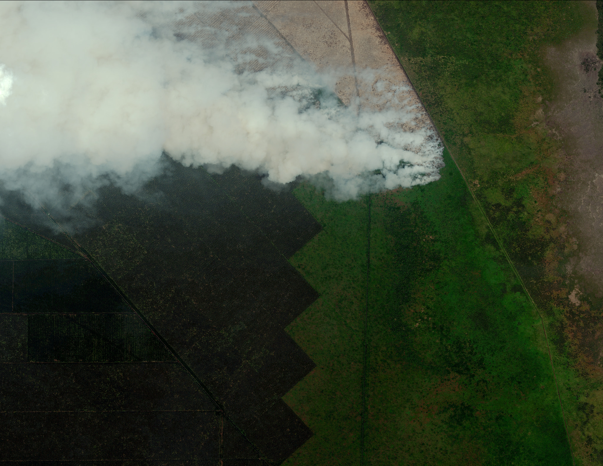 Land fire in Sumatra, Indonesia, made available through a partnership between Global Forest Watch Fires and Digital Globe. The dark patches on the left are a large pulpwood plantation (concession boundaries available on GFW fires).