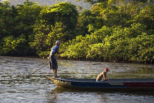 mangroves_0