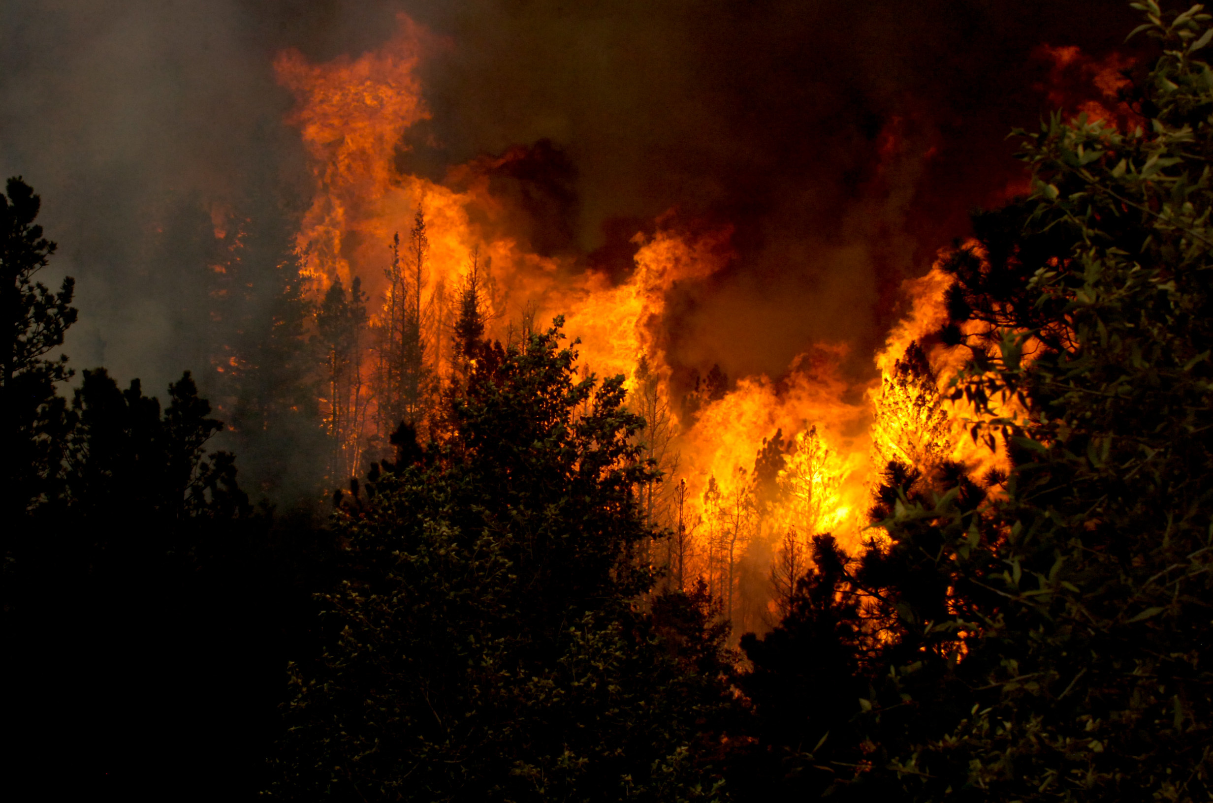 High Park fire