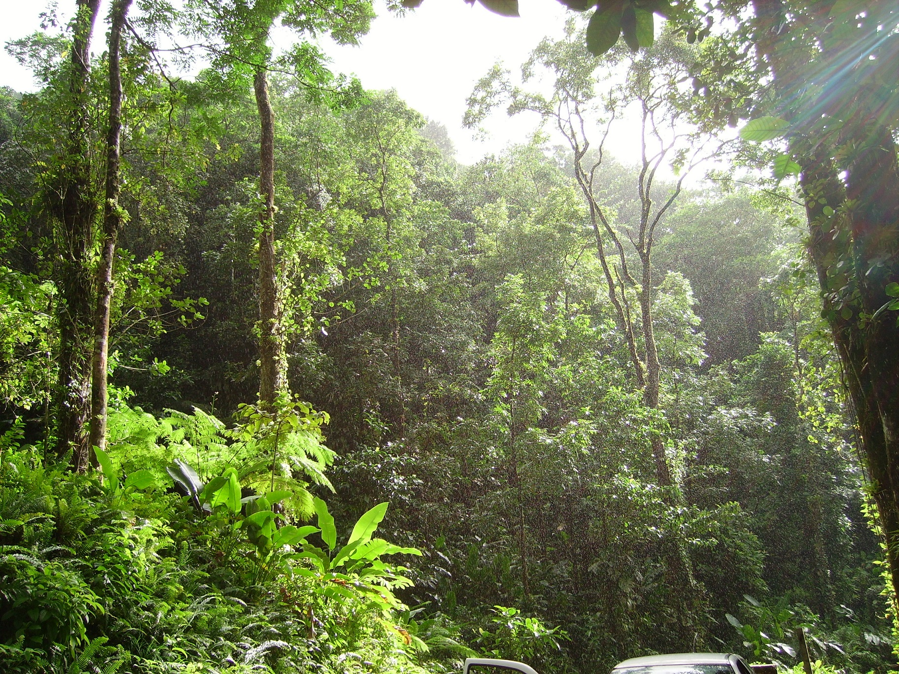Tropical_forest