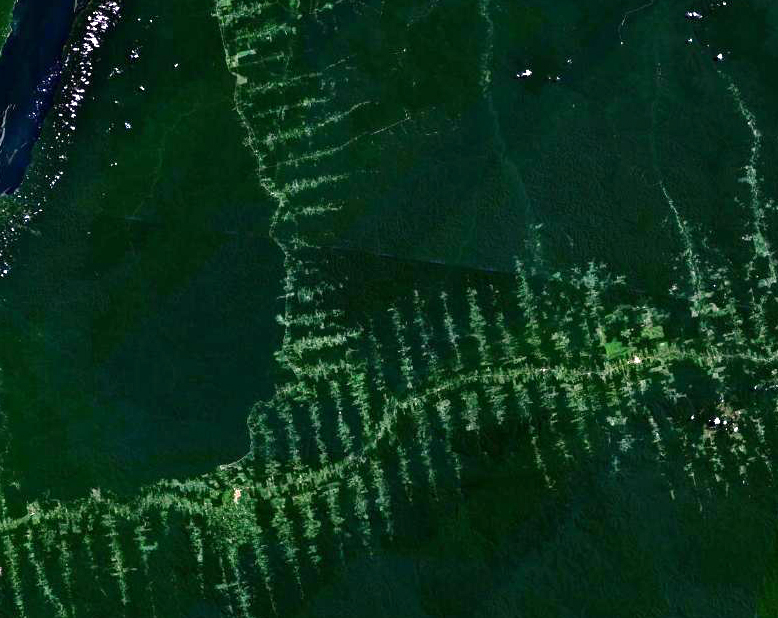 Amazonie_deforestation