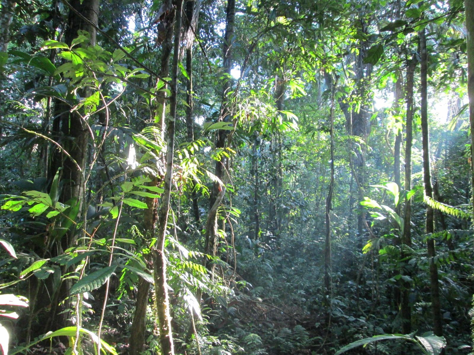 2012-11-17 - Bosque Shipetiari