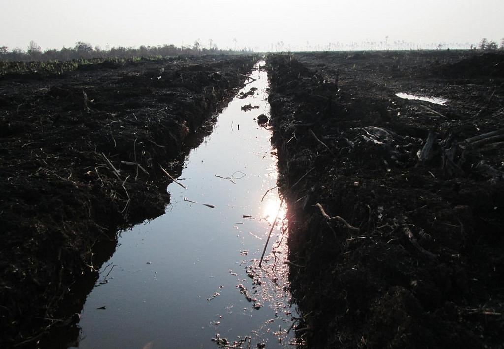 Peat draining