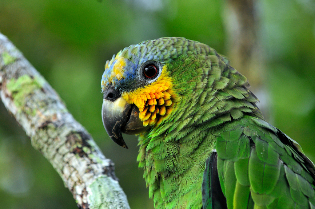 Amazon – Brazil, 2011.©Neil Palmer/CIAT
