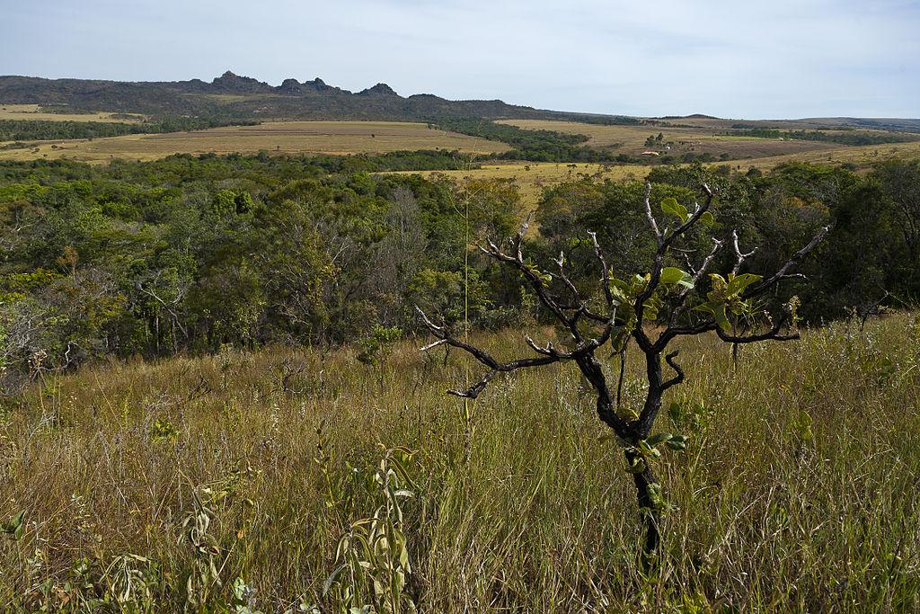 Cerrado_Parque_Estadual_dos_Pirineus
