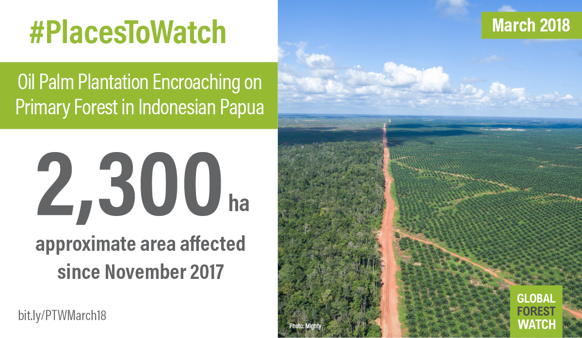 Oil Palm Plantation Encroaching on Primary Forest in Indonesian Papua