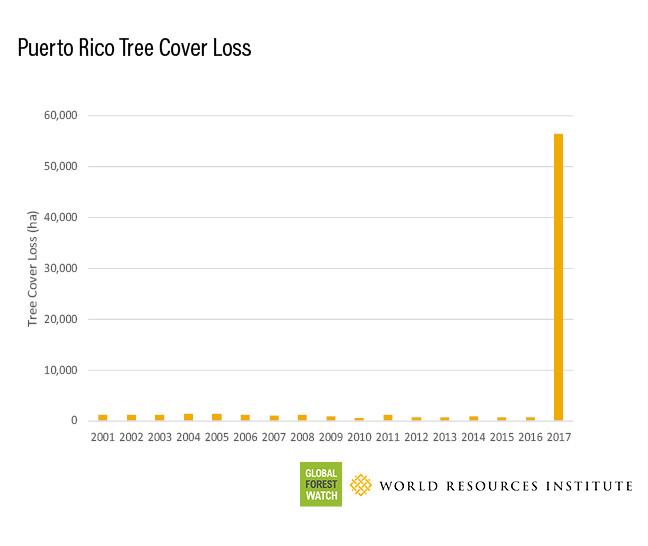 Puerto Rico Tree Cover Loss