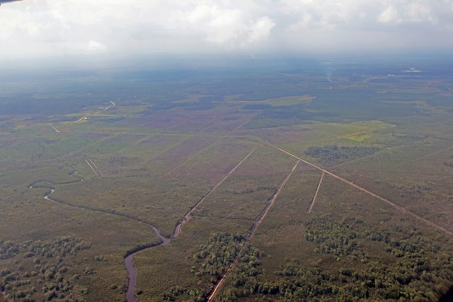 Drainage Canals in Peatland