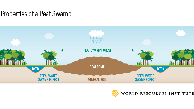 peat swamp graphic