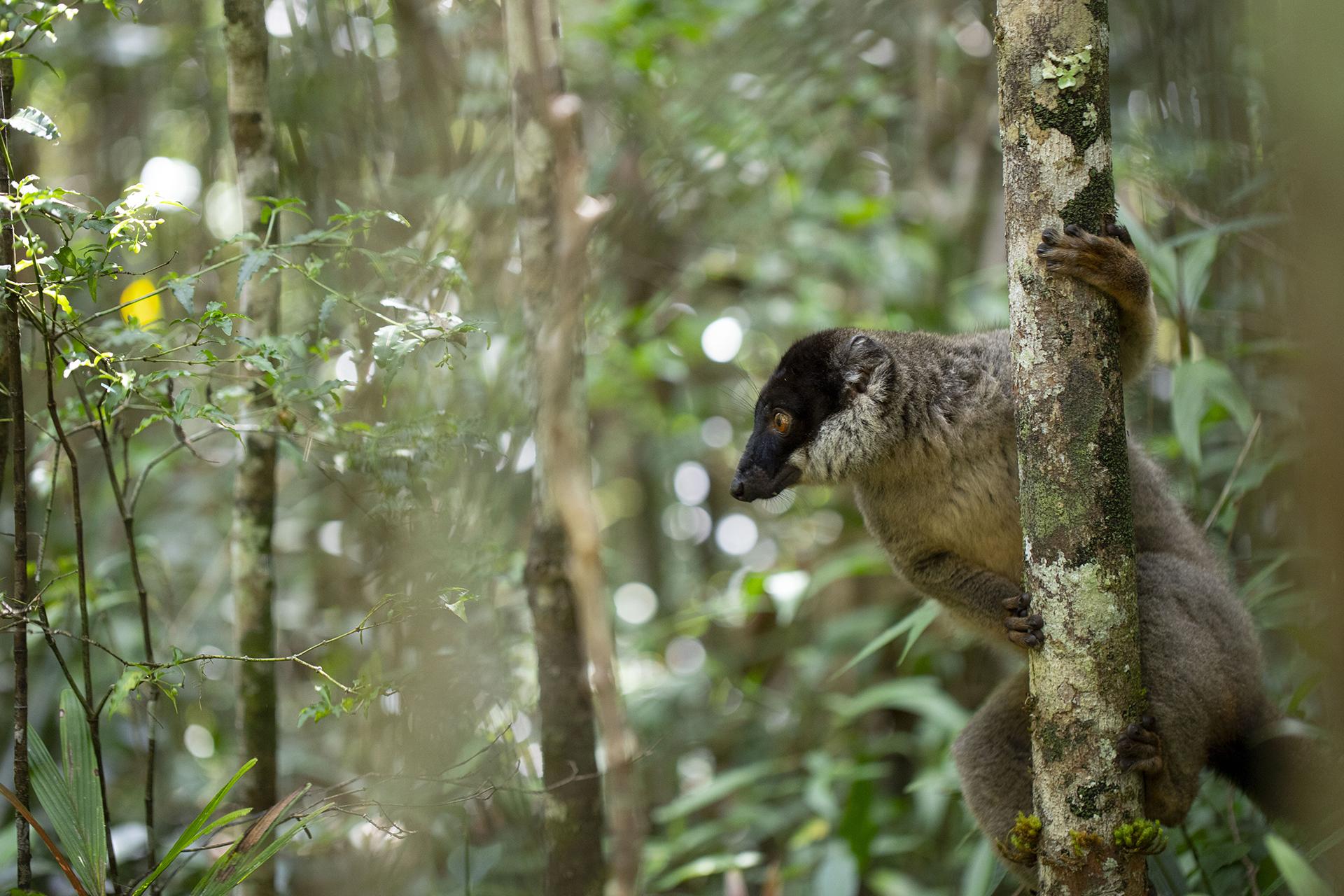 Blog_Madagascar_74