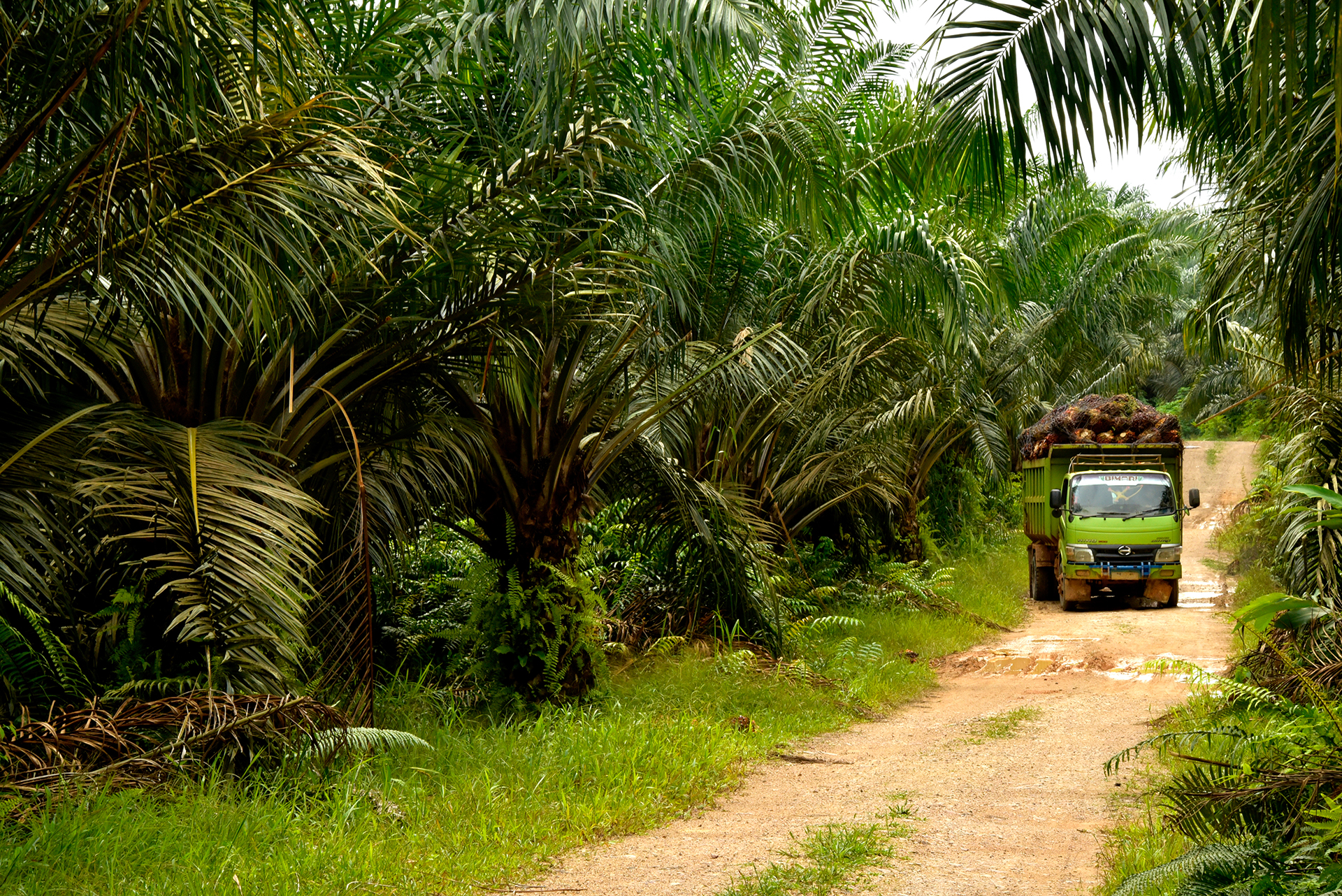 Oil Palm work