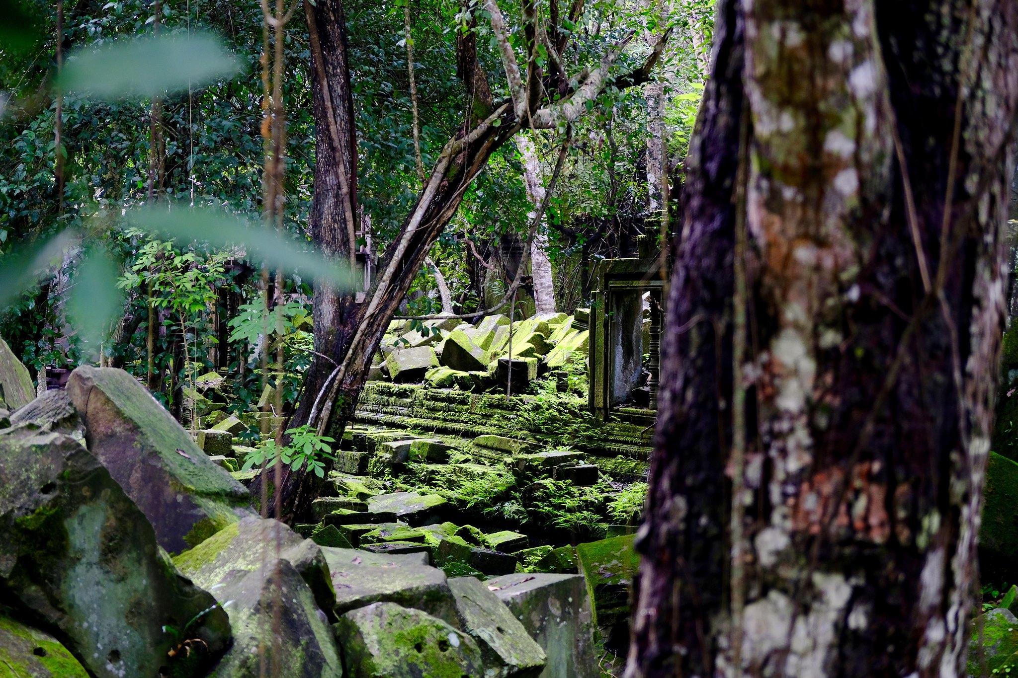CambodiaForest_Matt Dillon