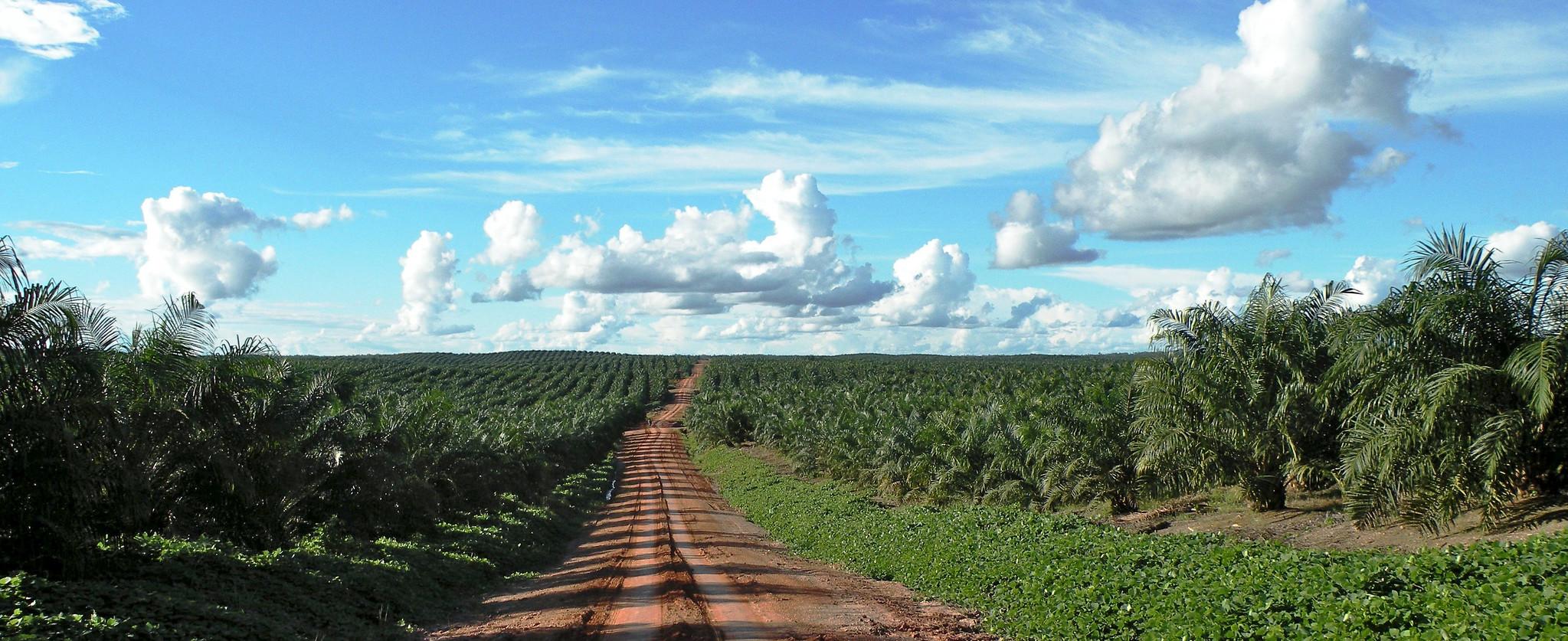 Plantation landscape