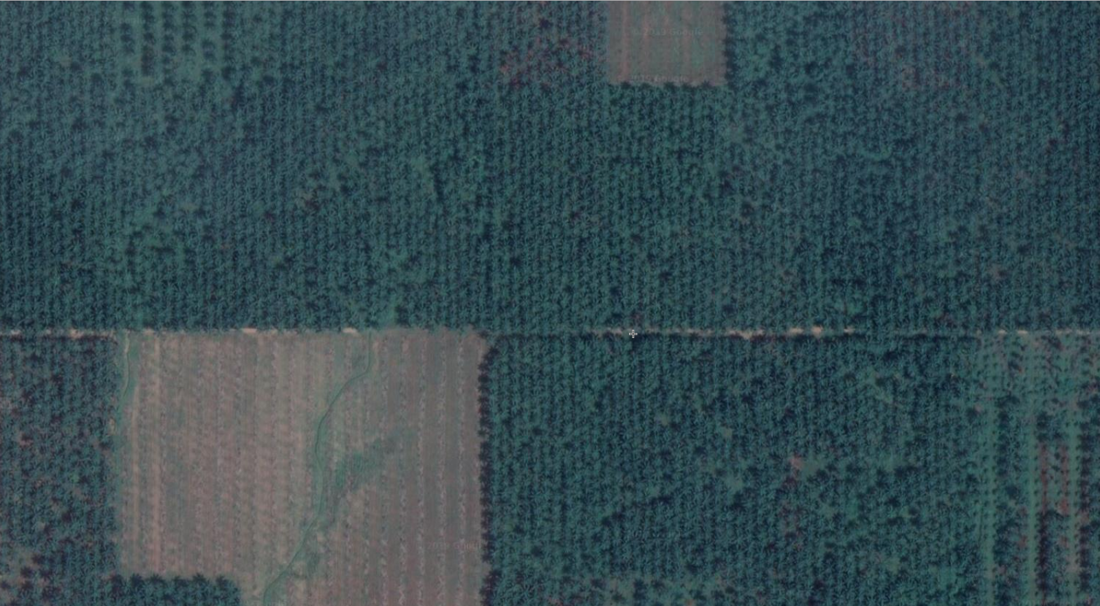 oil palm from above.