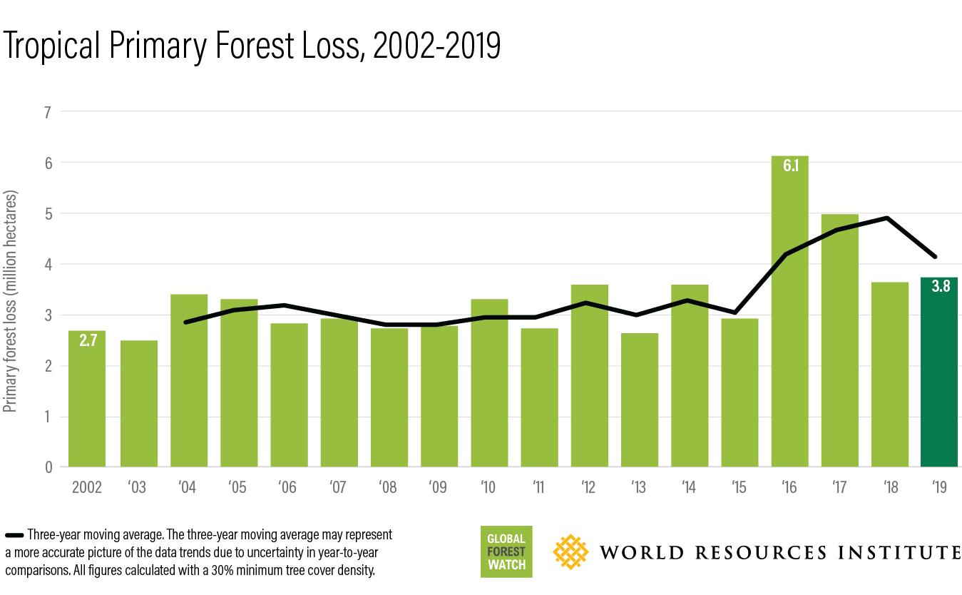 This bar chart shows how much forest has been lost annually between 2002 (2.7 million hectares) and 2019 (3.8 million hectares).