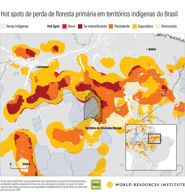 Um mapa ilustra as concentrações de perda de floresta primária nos territórios indígenas do Brasil.
