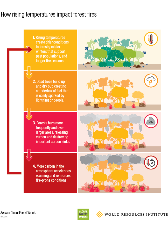 diagram showing how climate change is influencing forest fires