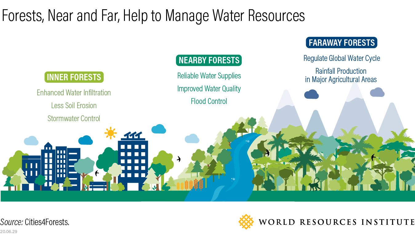 forests near and far help to manage water resources