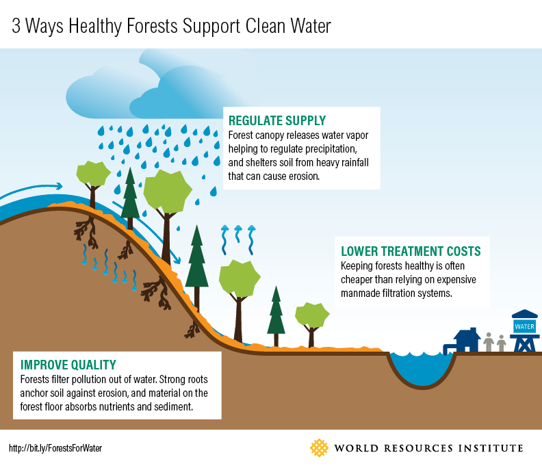 3 ways forests support clean water