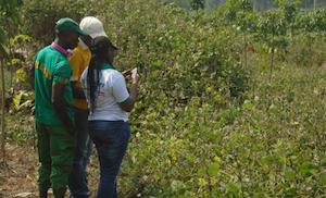 2S2D: Système de suivi de la dégradation et la déforestation au Cameroun