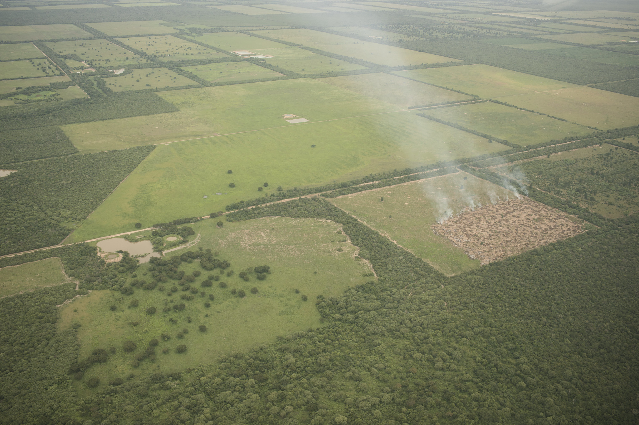 fire clearing cattle pasture in the Gran Chaco, Paraguay