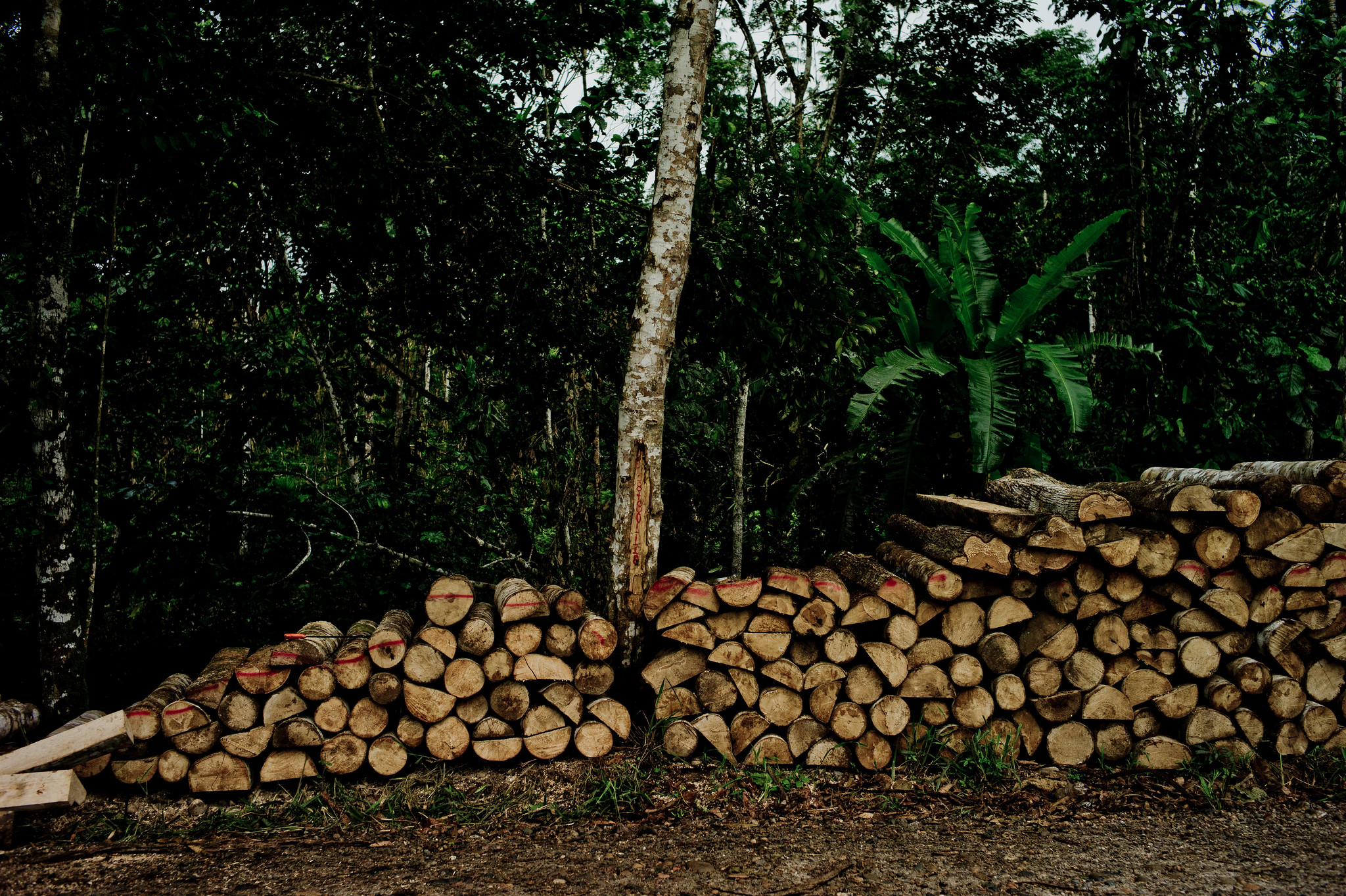 logs sit by road in ecuador