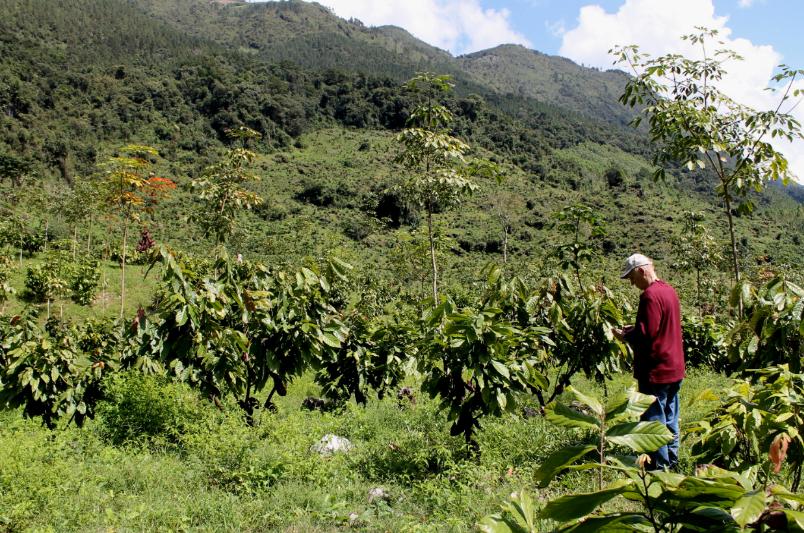 guatemala restoration project sustainable cocoa