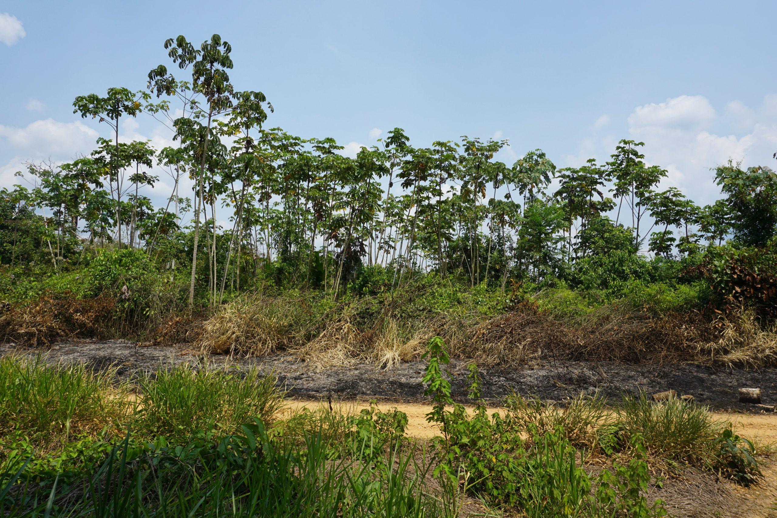 Deforested area close to Alegria, Madre de Dios.